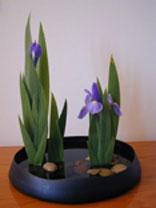 ikebana Iris