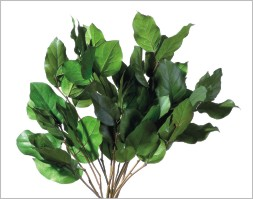 preserved-salal-leaves