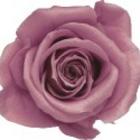 rose-preserved-cherry-blossom