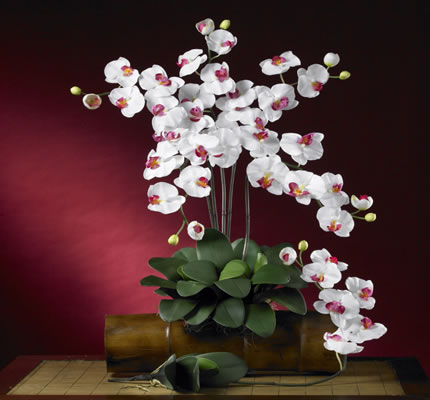 Phalaenopsis Silk Orchid White