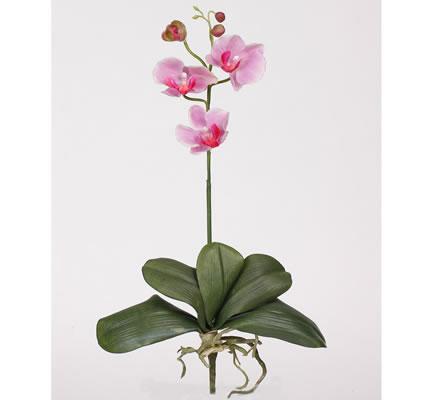Mini Phalaenopsis Silk Orchid