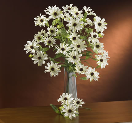 Cosmo flowers white