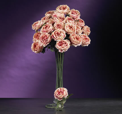Large Rose Stem Pink