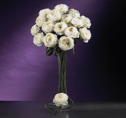 Large Rose Stem White
