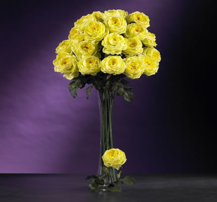 Large Rose Stem Yellow