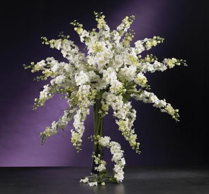 Delphinium Stem White