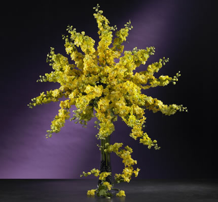 Delphinium Stem Yellow