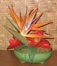 Bird's of paradise design