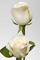 Rose Amelia White