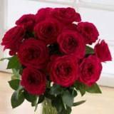 12 Darcey Garden Roses