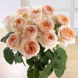 Garden Rose David Juliette
