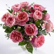 Garden Roses Phoebe