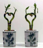Lucky Bamboo Hearts
