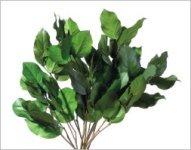 preserved salal leaves