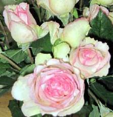 Wholesale garden Roses