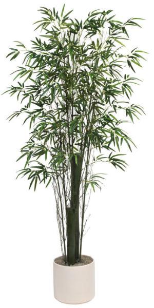 Bamboo Tree Green