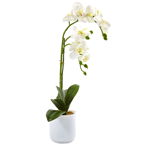 White Phalaenopsis orchid arrangement