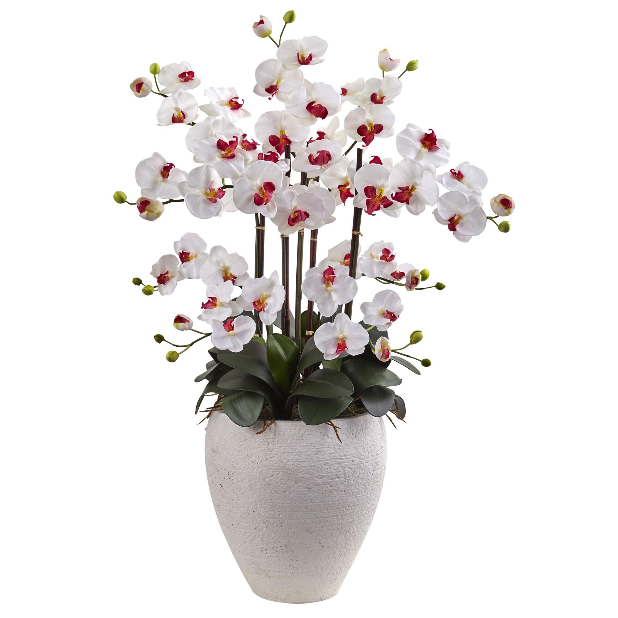 white  phalaenopsis orchids arrangement