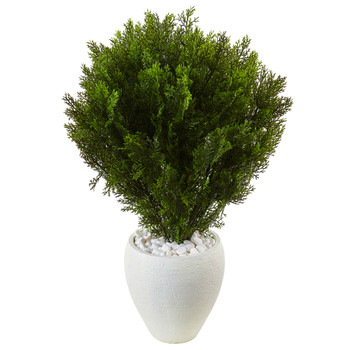 Silk Cedar tree