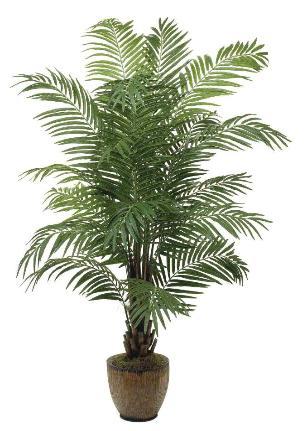 Areca Palm 6 inch