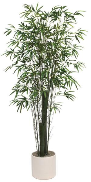 Bamboo Tree Green