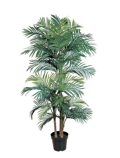 Golden Cane Palm 78 inch