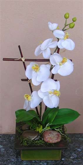 White phalenopsis orchid in green ceramic. By Paolo Calvenzani
