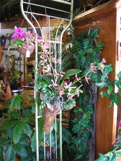 Orchid display at Joys Florist in Fort Lauderdale