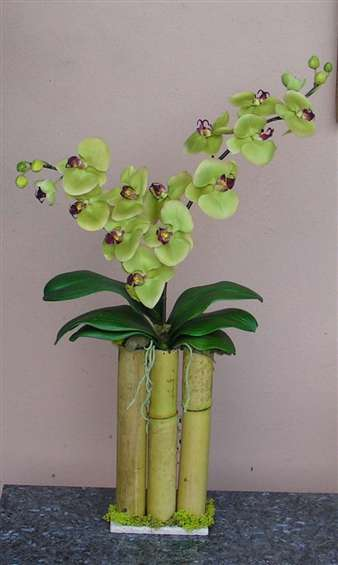 Green phalenopsis orchids in bamboo container. By Paolo C.