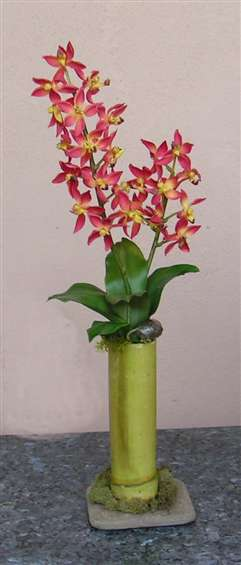Variegated orchids in bamboo container. By Paolo Calvenzani