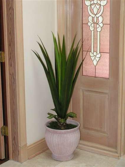 Succulent agave in ceramic