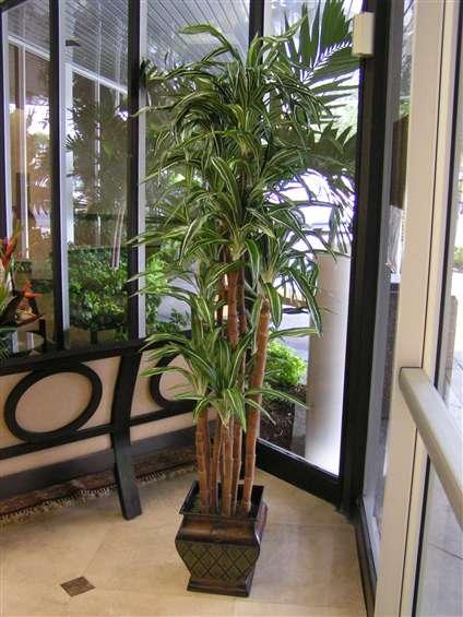 Silk palm tree