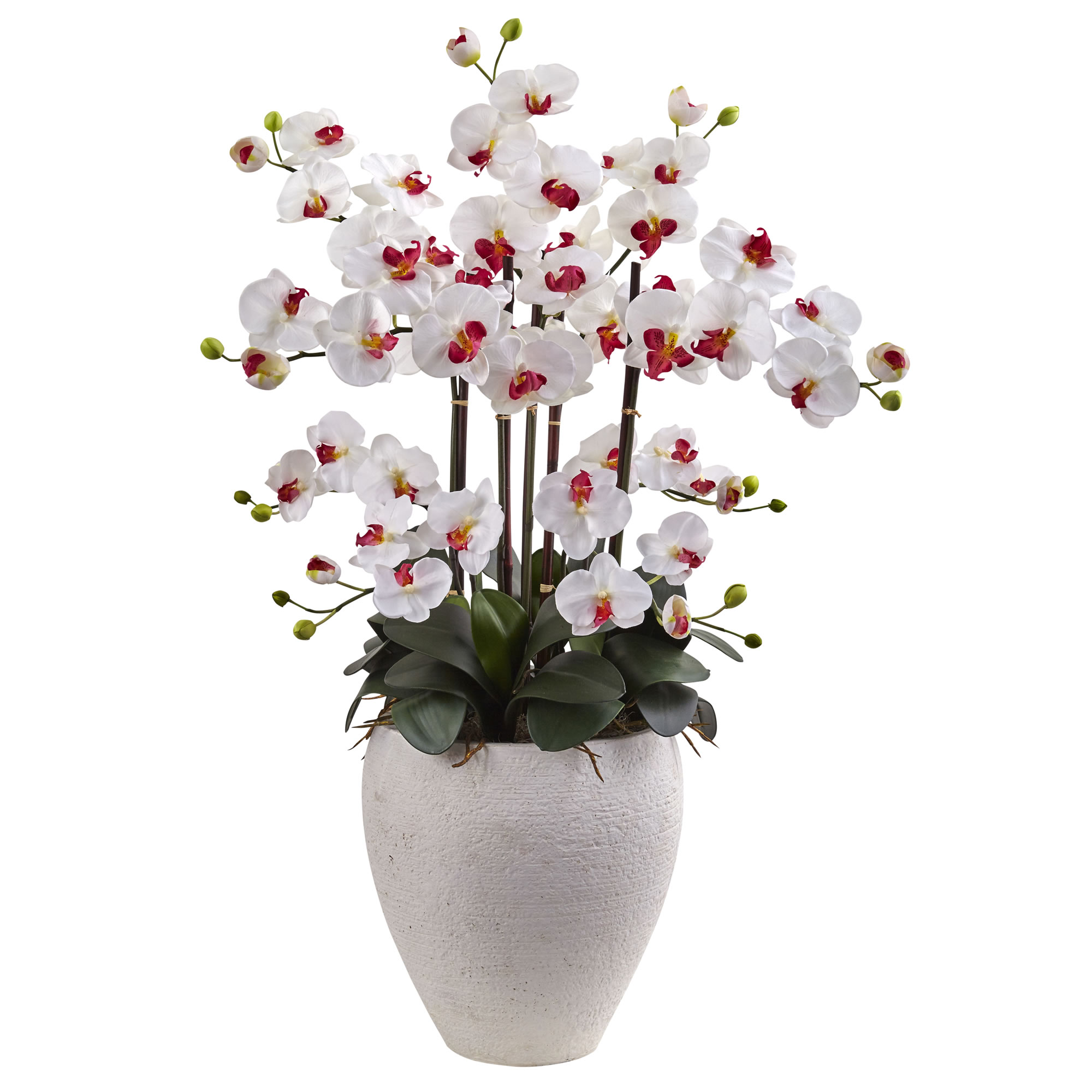 white  phalaenopsis orchids arrangement
