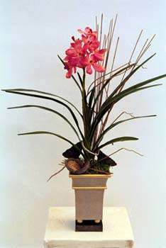 Dark Pink Vanda orchid in metal container