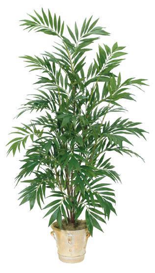 Bamboo Palm Tree