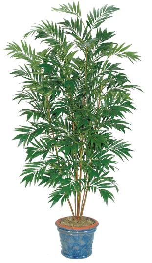 Bamboo Palm Tree