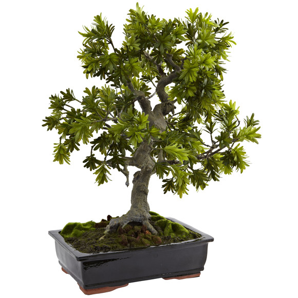 Silk bonsai tree