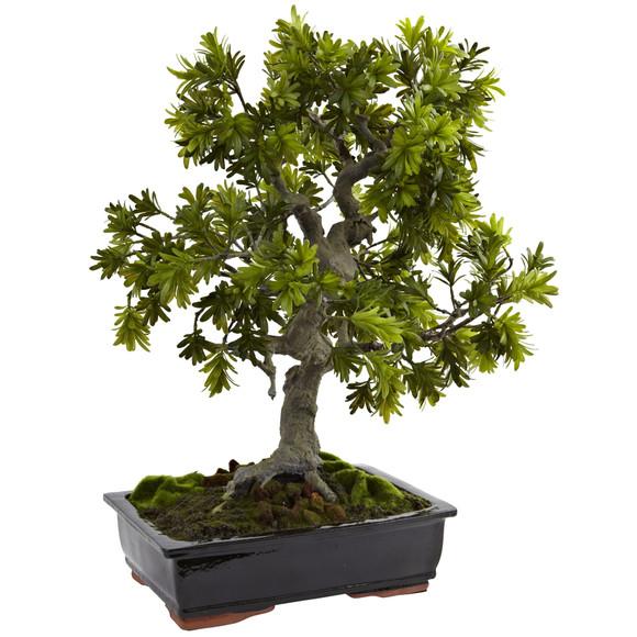 Silk bonsai tree