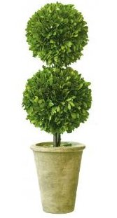 Preserved Boxwood Topiary Double Ball. 20 inches height