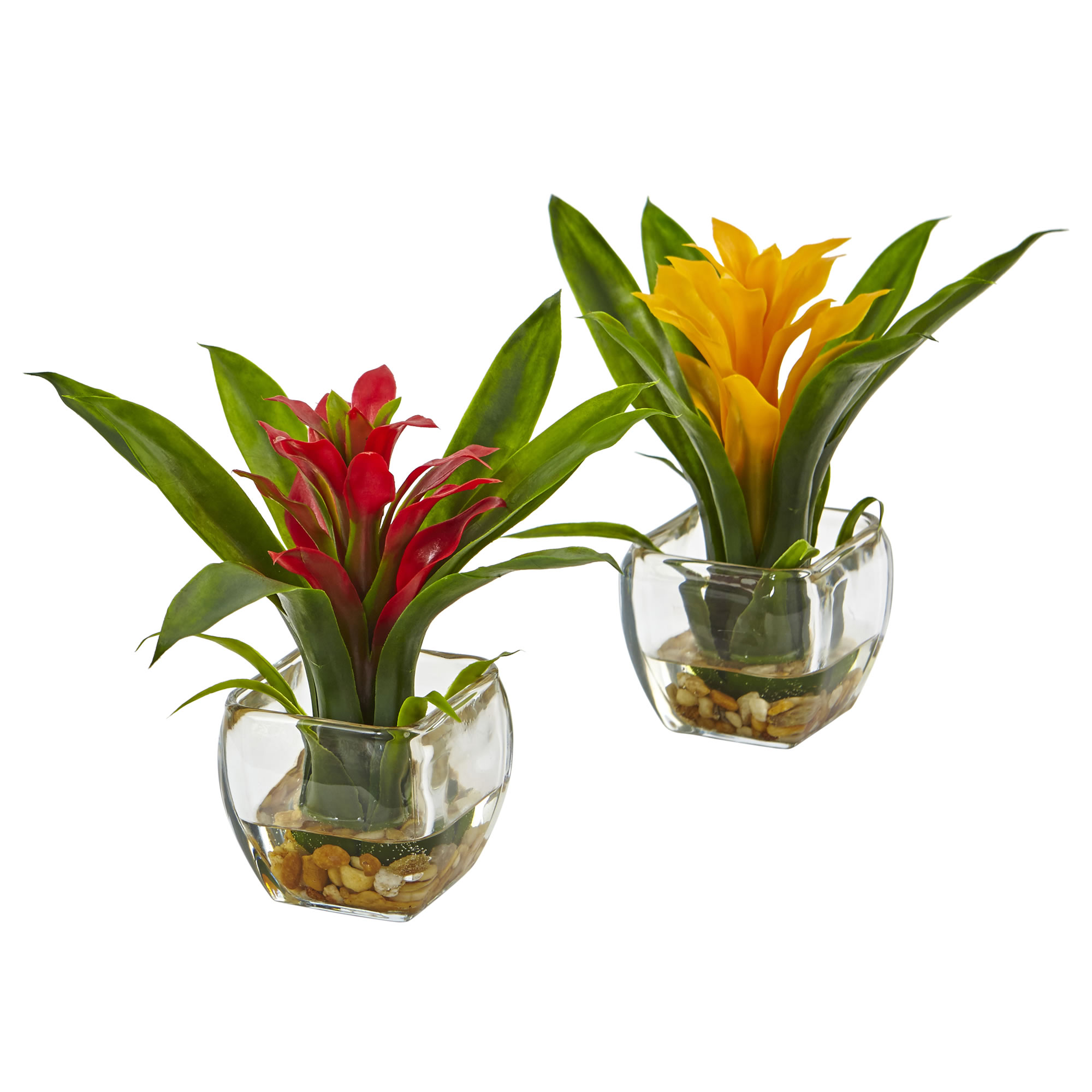 set of two tropical bromeliads flowers. With bold yellow and red petals. Lush green leaves grow vertically to cushion the flowers. Square glass vases with neutral pebbles and faux water.
