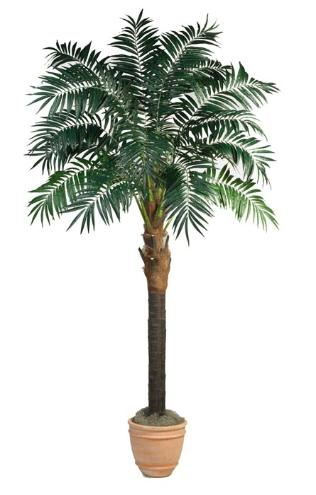 Bulb Areca Palm tree 9 inch