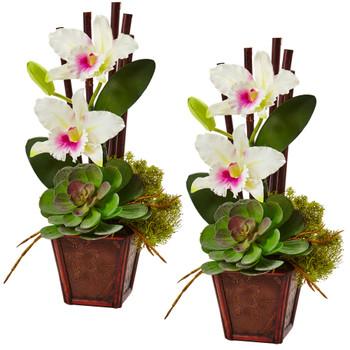 Cattleya Orchid And Succulent Arrangement