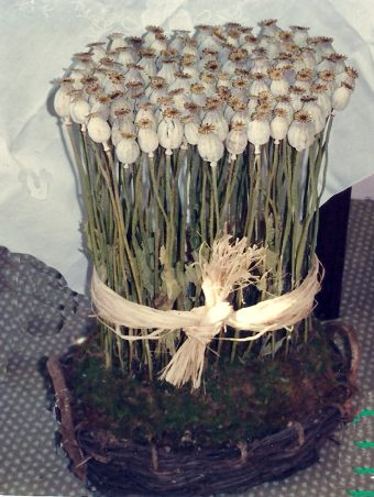 Dried flower Poppy arrangement. Made in 1998 by Paolo