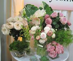 Old world garden roses