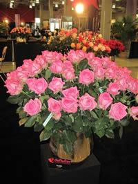 Pink/lavander roses