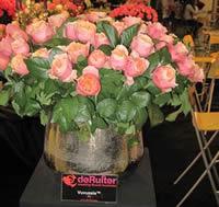 Orange color roses