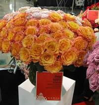 Big orange roses