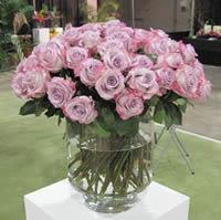 Lavander roses