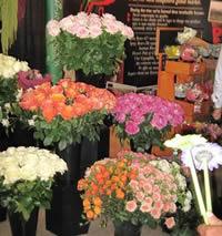 Ecuadorian Rose pictures
