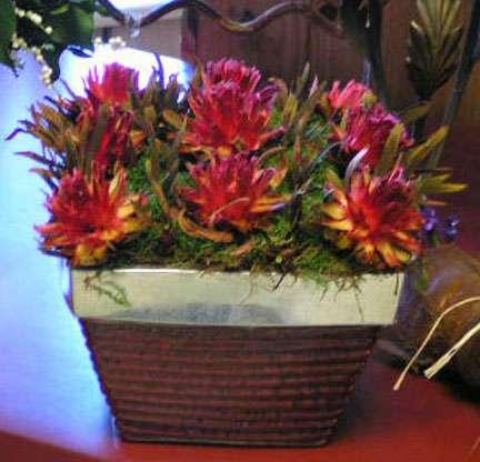 Exotic arrangement